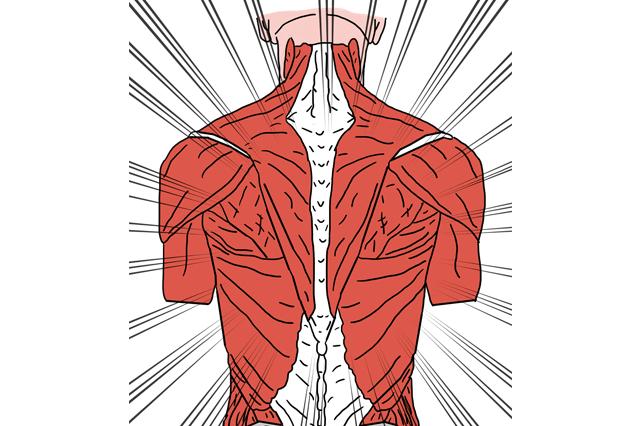 muscoli-corpo